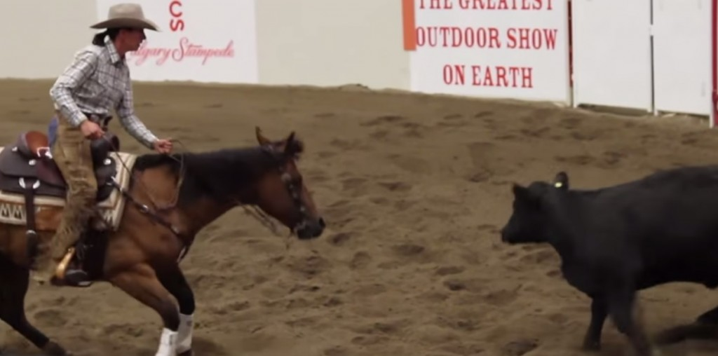 Calgary Stampede Working Cow Horse Open Bridle Class Day